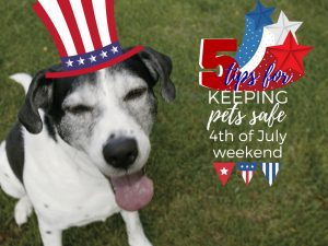 Protecting Your Pets During 4th of July