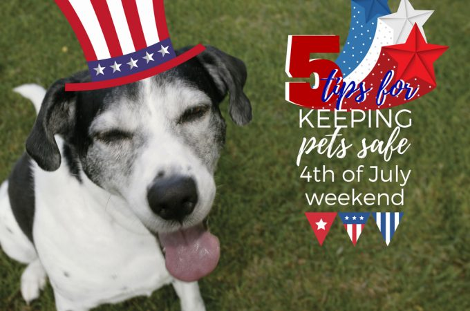 ways to keep pets safe during fireworks