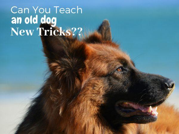 Teaching an Old Dog New Tricks