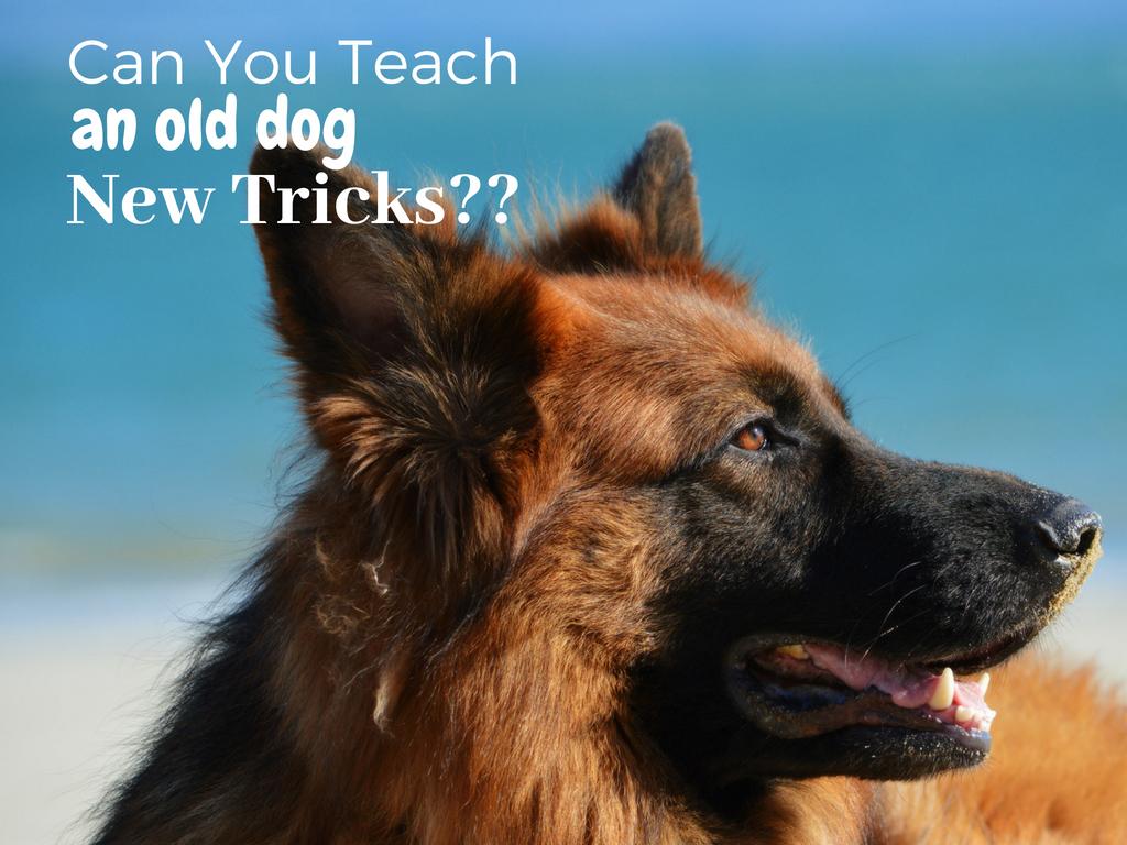 Can You Teach an Old Dog New Tricks