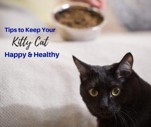 It's Happy Healthy Cat Month!!