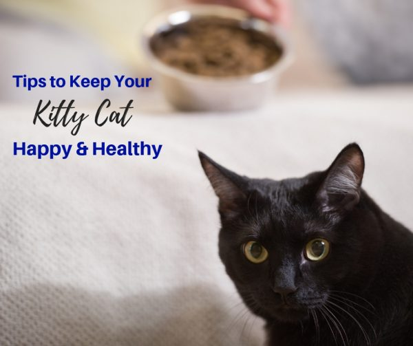 It's Happy Healthy Cat Month!!